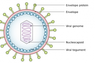 Virus diagram